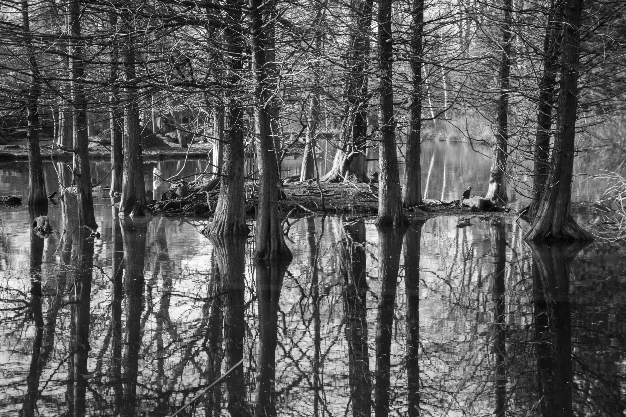 Black and White Marsh.jpg