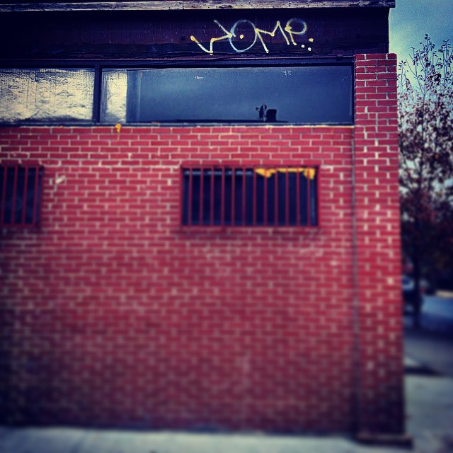 Womp might just be Spider-Man. #womp #collectthemall #streetart #halloween #brooklyn #kooleyishigh #ouchere