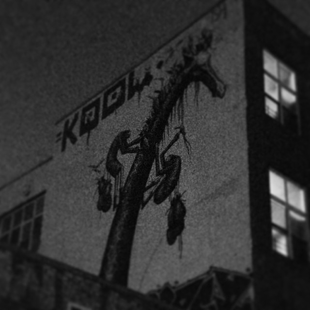 Koolin in Brooklyn.