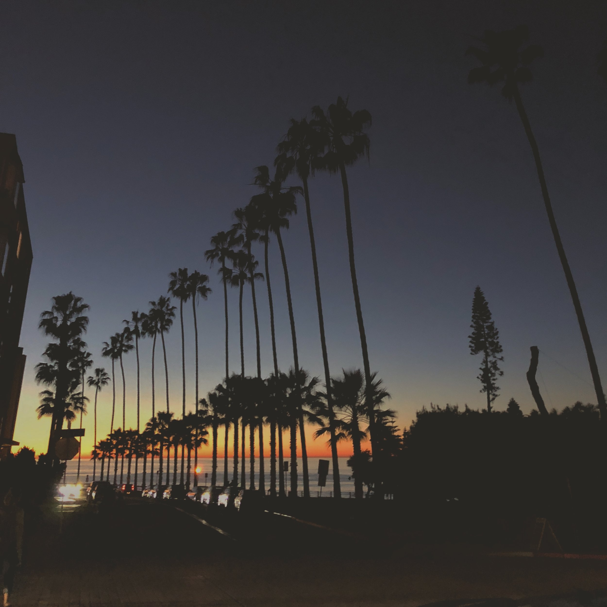 grandtheftauto419andahalf   counting the days until I'm back on the west caost  .  .   #venice #palmtrees #yuccafest #sunset #california
