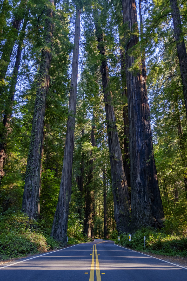 red_wood_northern_california_state_park-94.jpg