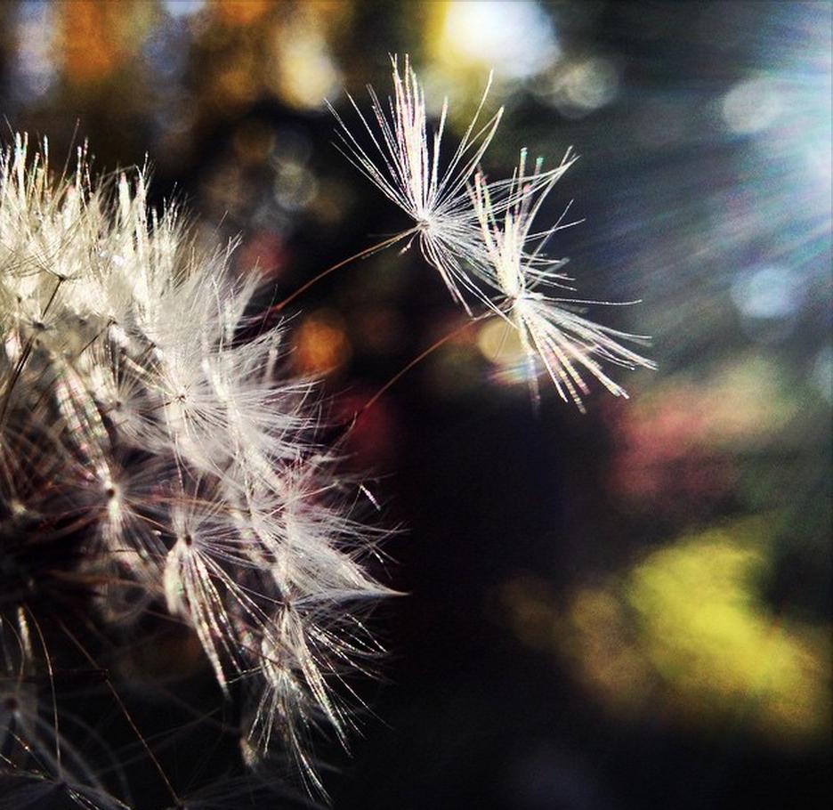 wish-making.jpg