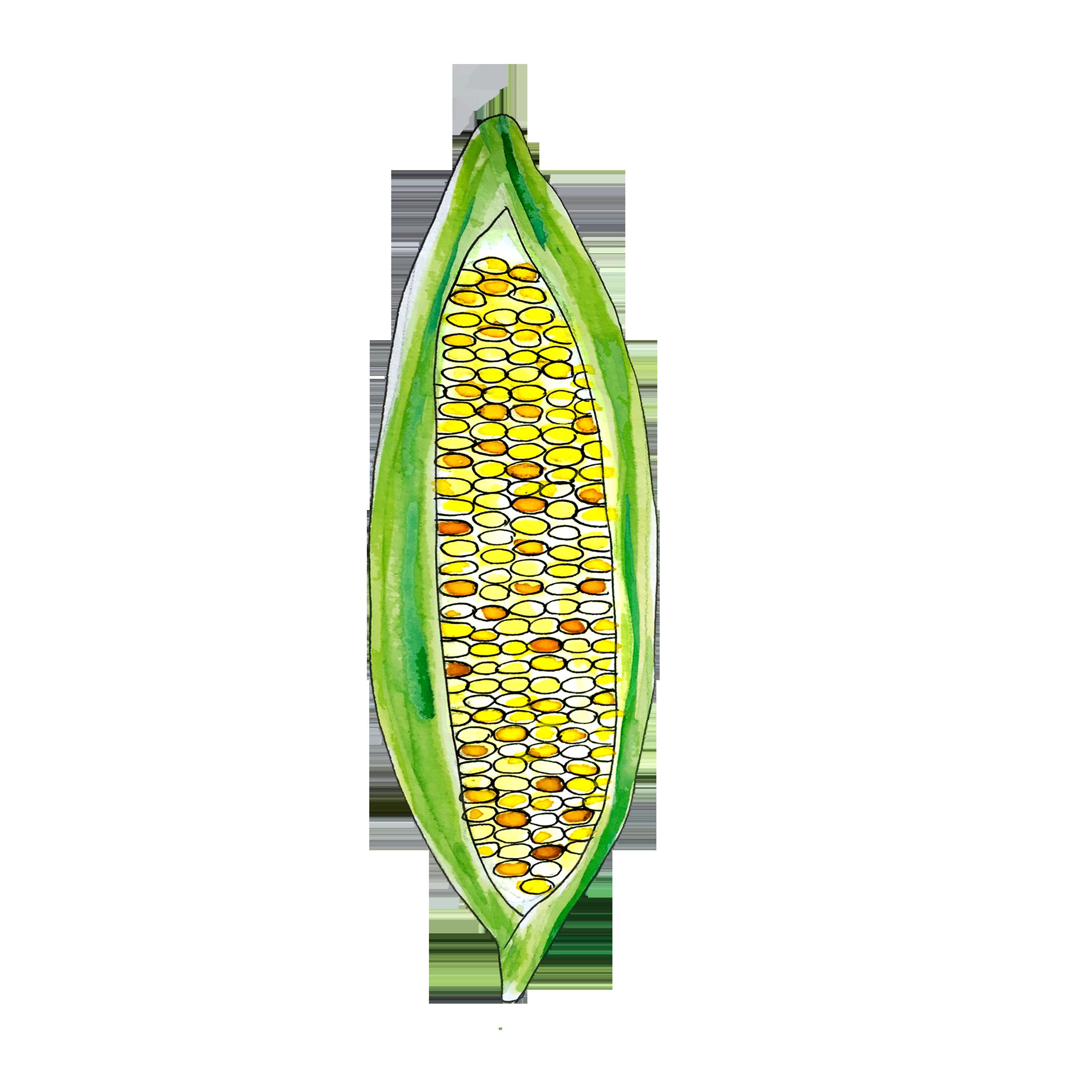 corn_june2018_lyndsay.png
