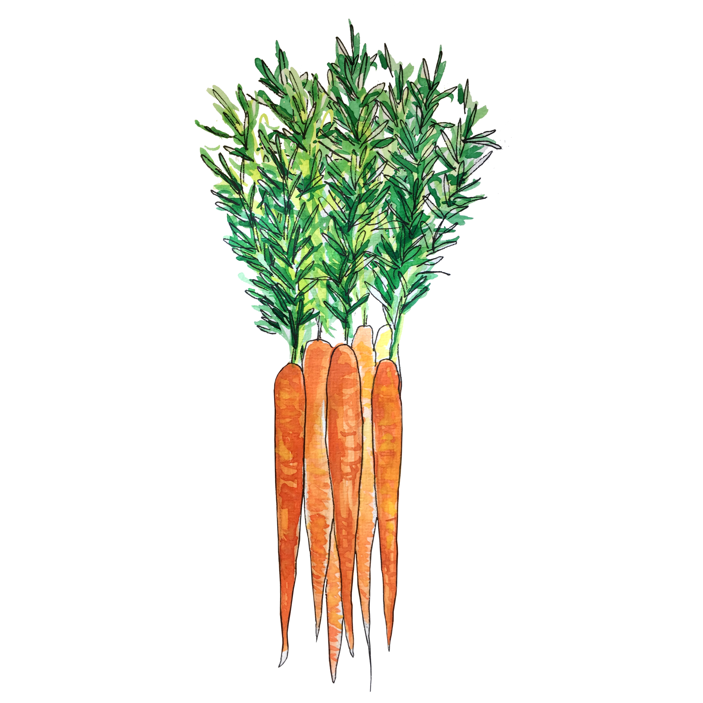 carrots_june2018_lyndsay.jpg