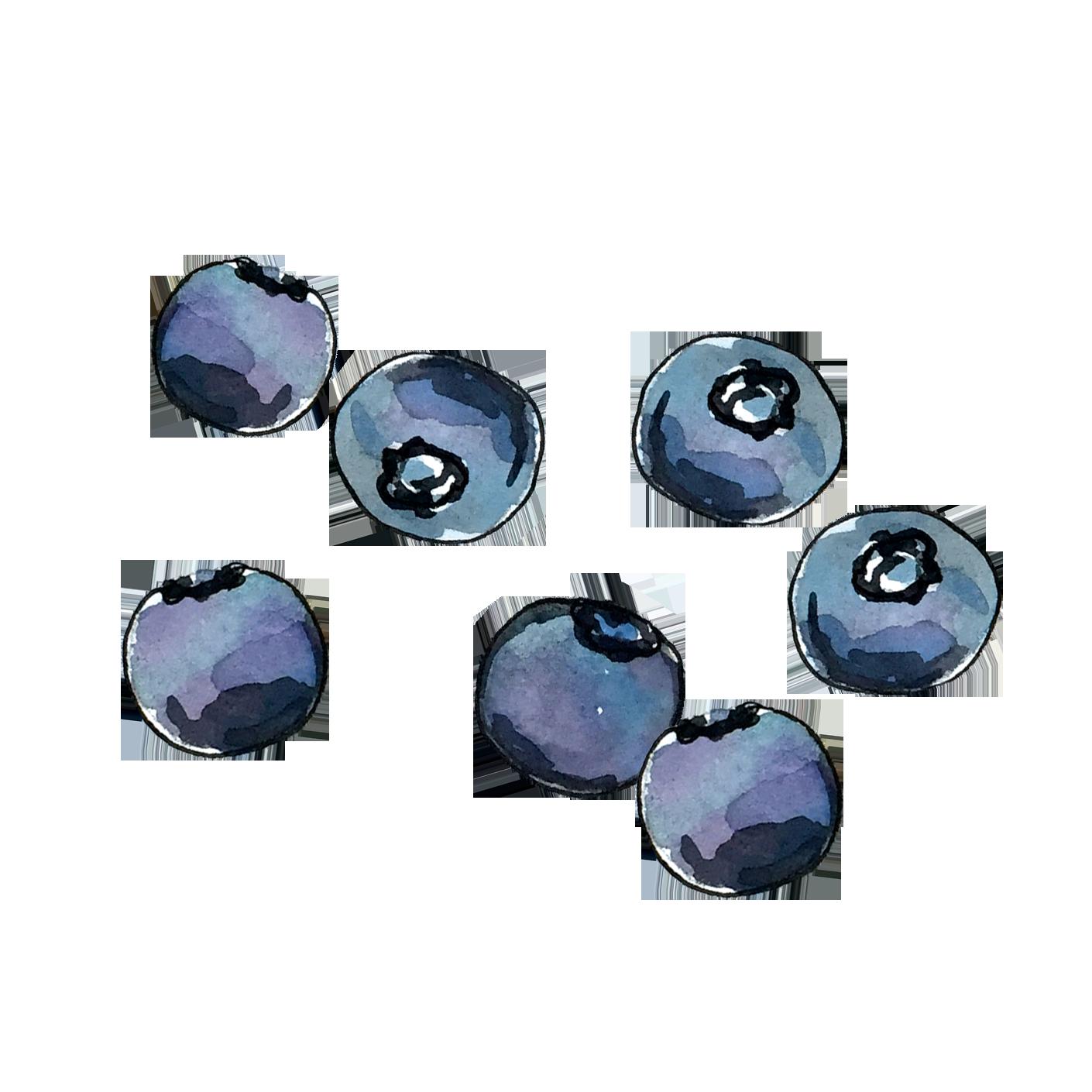 blueberry_june2018_lyndsay.png