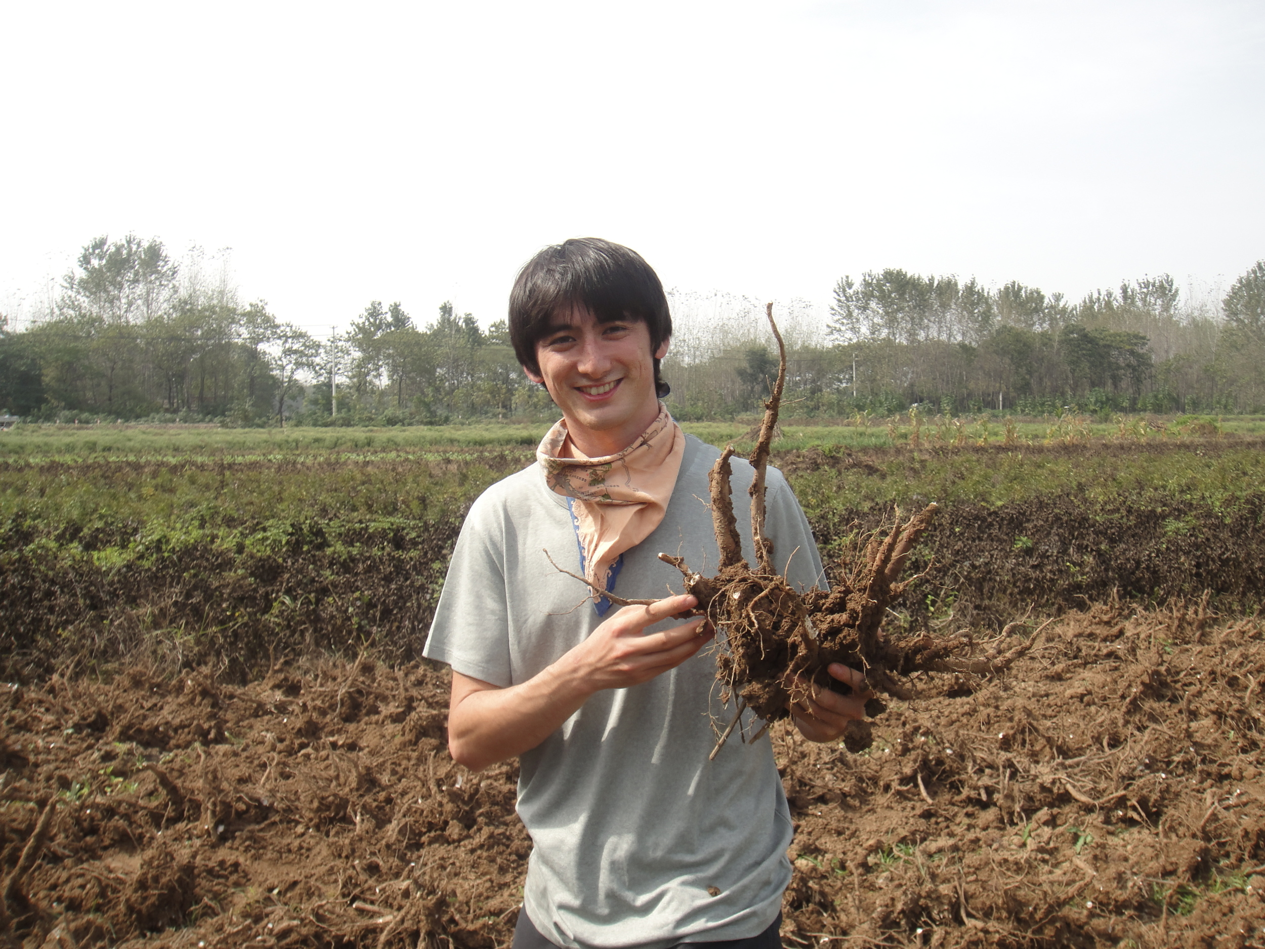 Holding the Chinese herb Bai Shao Yao, or white peony root, newly harvested outside of Bozhou, China.