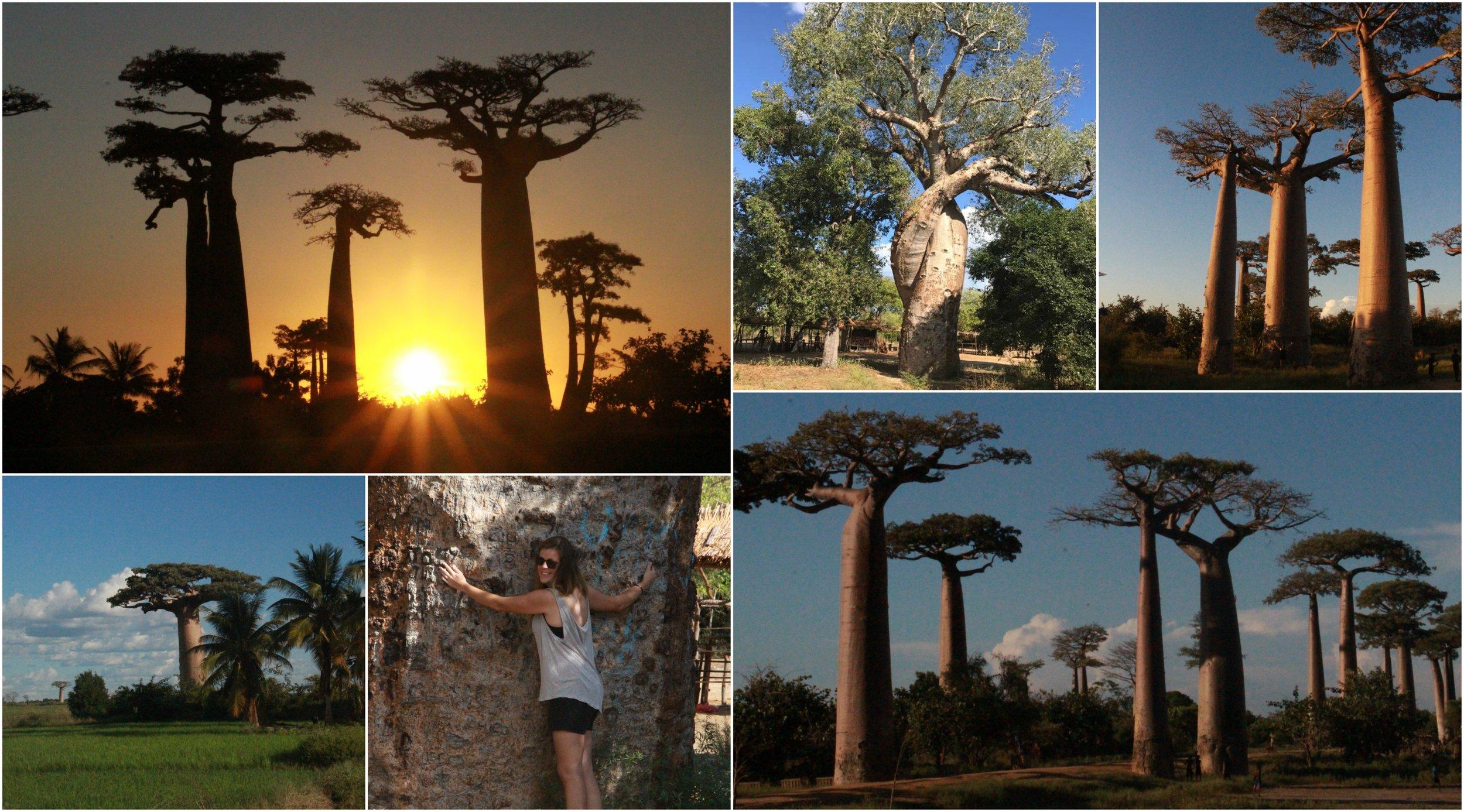 Baobab Avenue outside of Morondava