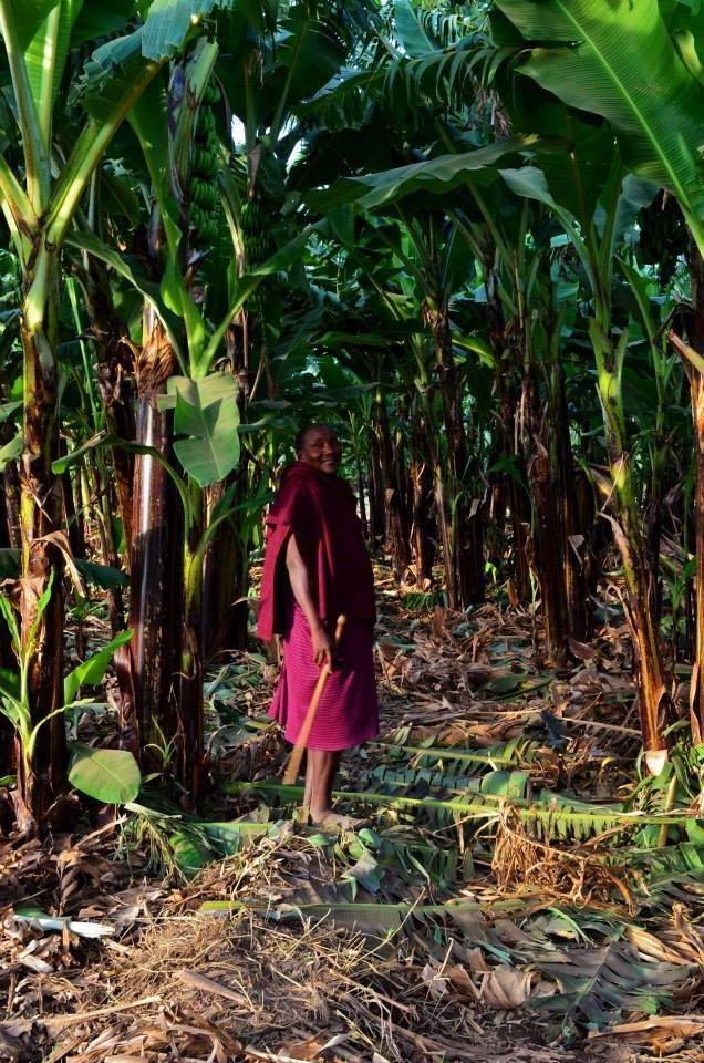 Mr. Daudi in the Engaruka banan plantation.