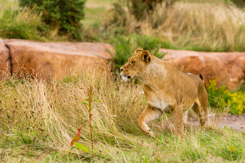 Longleat  is a short drive from the cottage, with  safari park , adventure park, Longleat House & events.