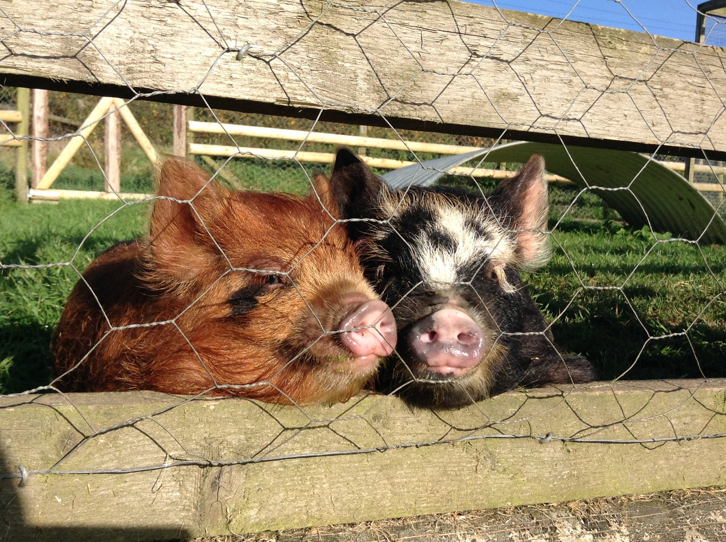 These little cuties moved in with us when we were working on a smallholding in Devon in Autumn '16