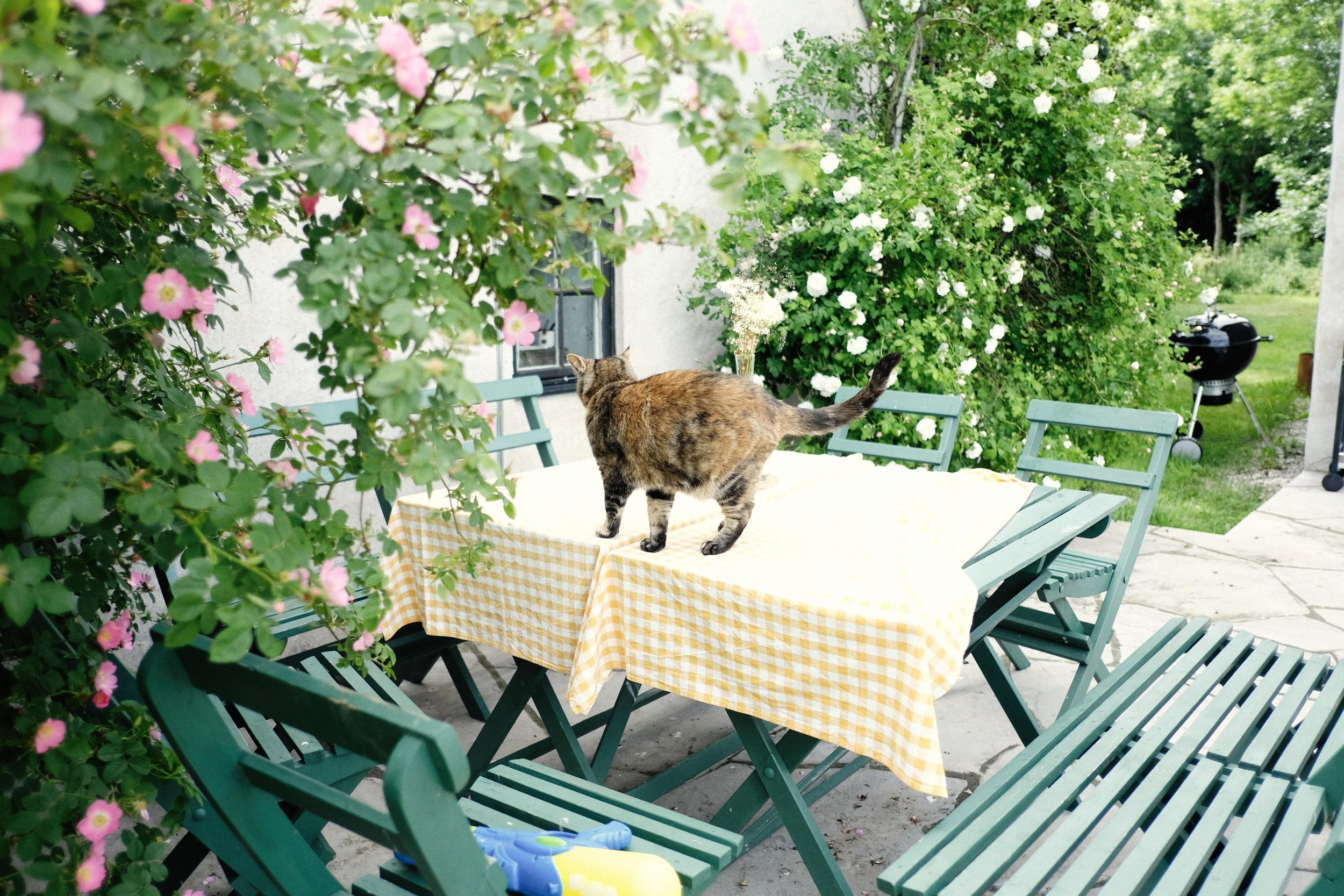 Här sitter jag dricker jag mitt morgonkaffe! Med eller utan katt på bordet.