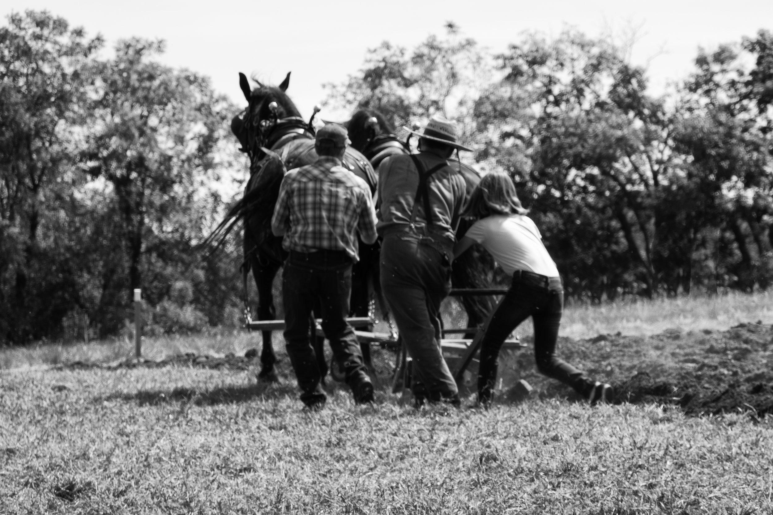 Plowing the fields 3