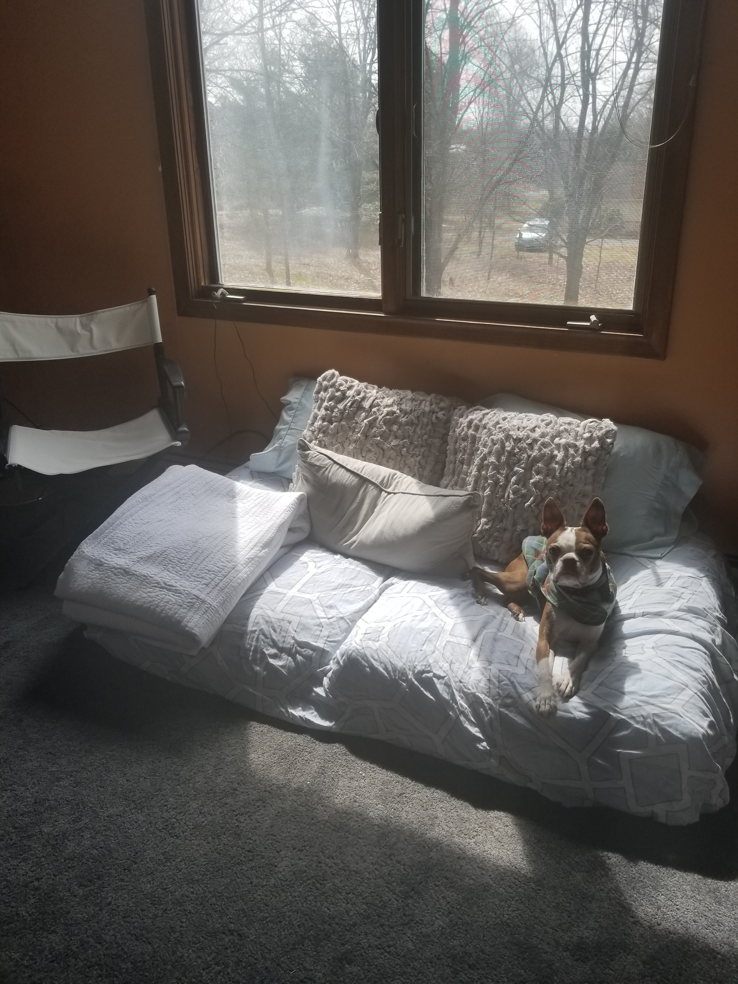 Hmm....my dog always steals the show, the best thing in the picture now.  A little hint on the final reveal with a makeshift daybed.