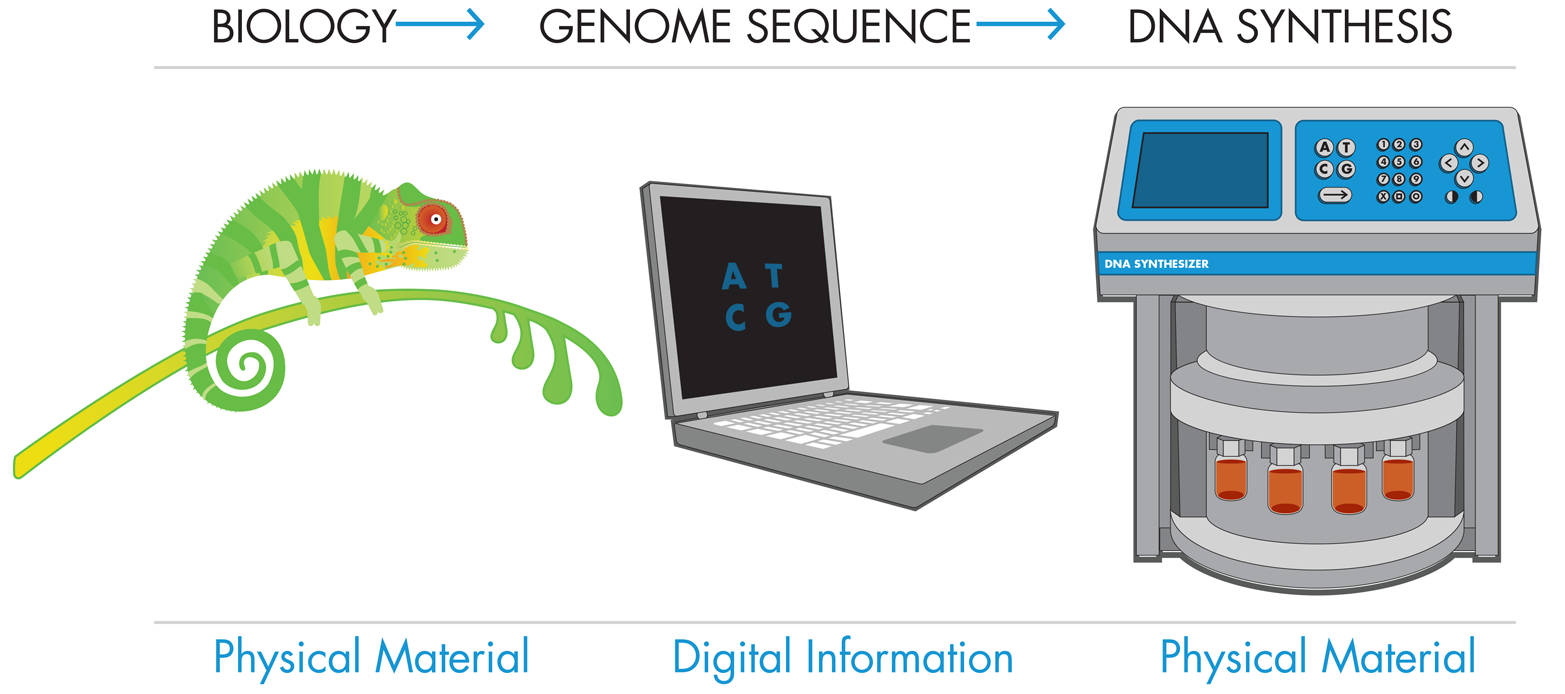 """A basic diagram from """"Fundamentals of Synthetic Biology"""",breaking down the general steps involved in synthesizing DNA."""