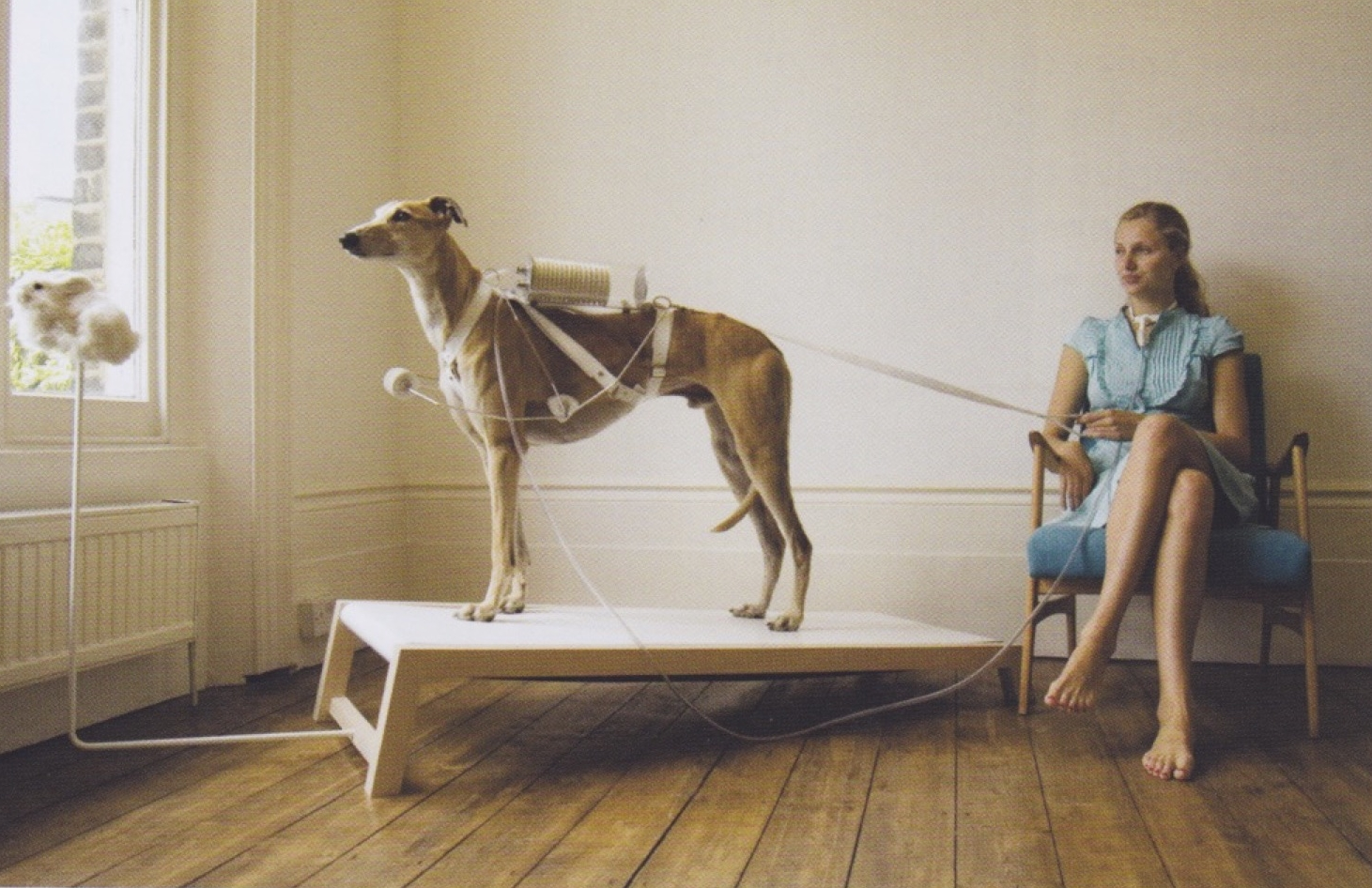 Revital Cohen,  Respiratory Dog , 2008, from the series  Life Support