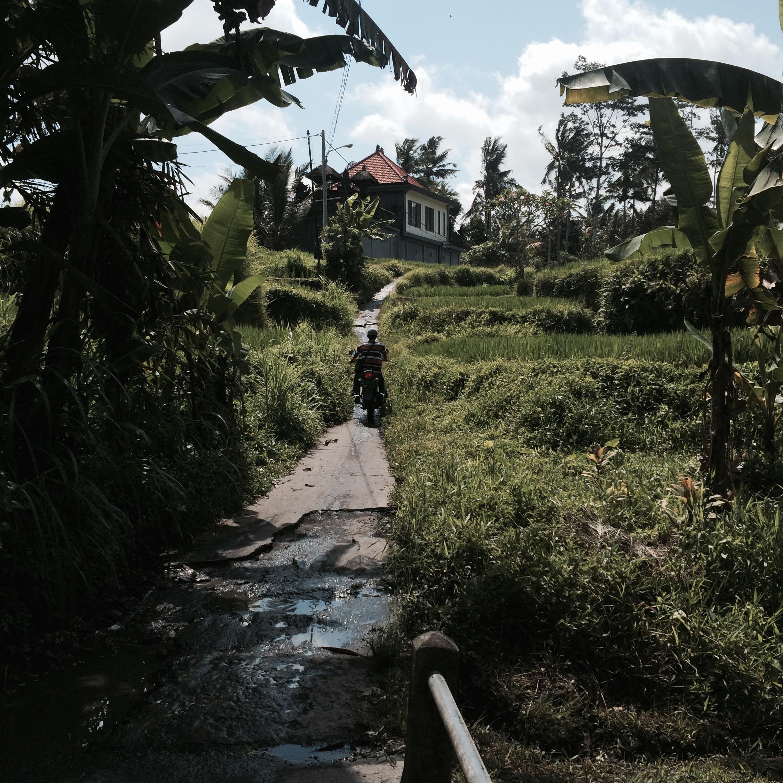 Rickety roads in the rice fields