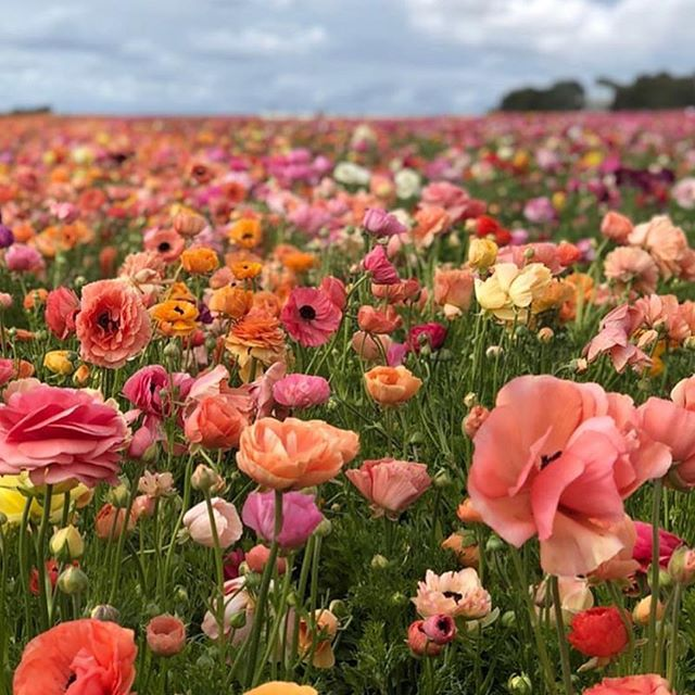 This post is in support of Optimism. Spring is somewhere near by. (Just not close enough.) photo courtesy of @trinaturk