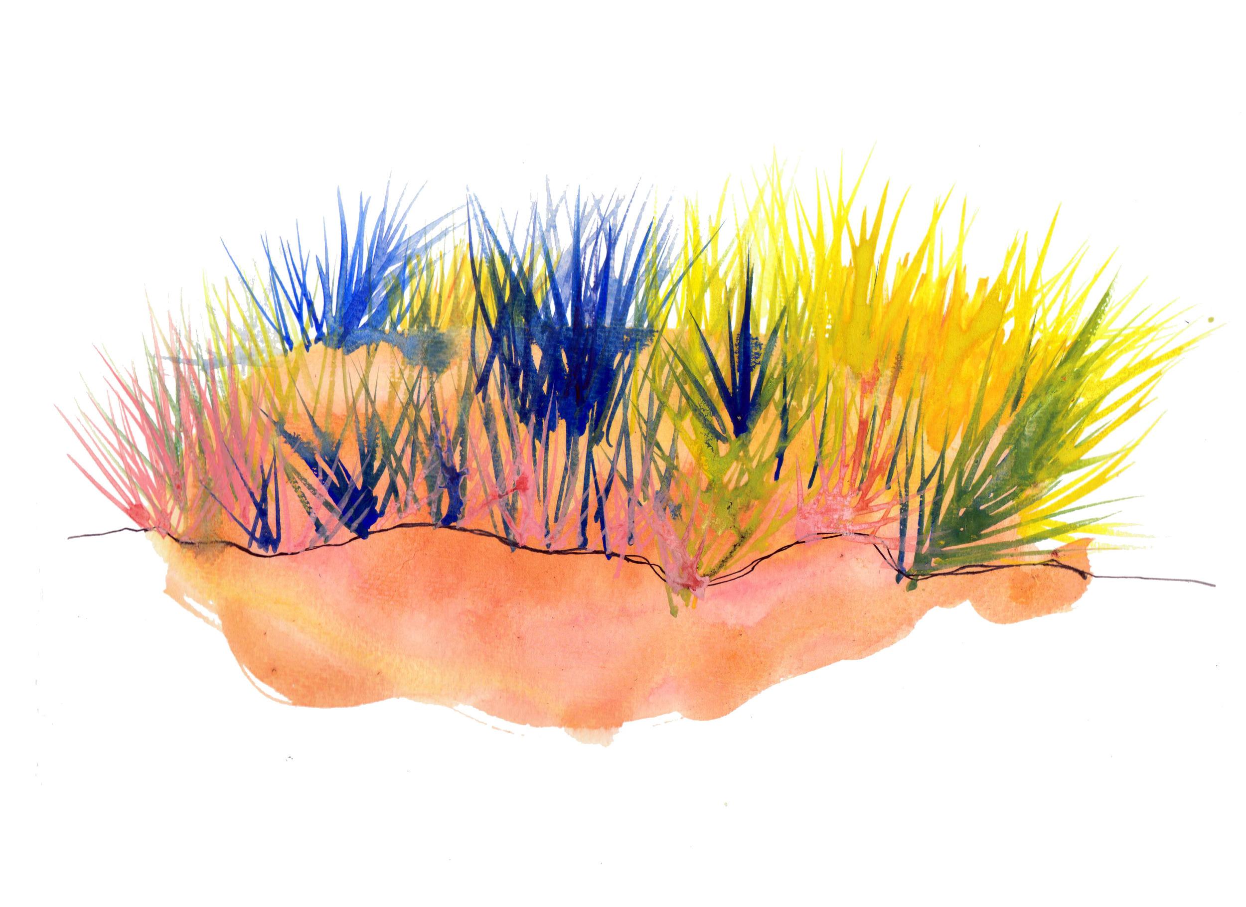 prairie grassland.jpg