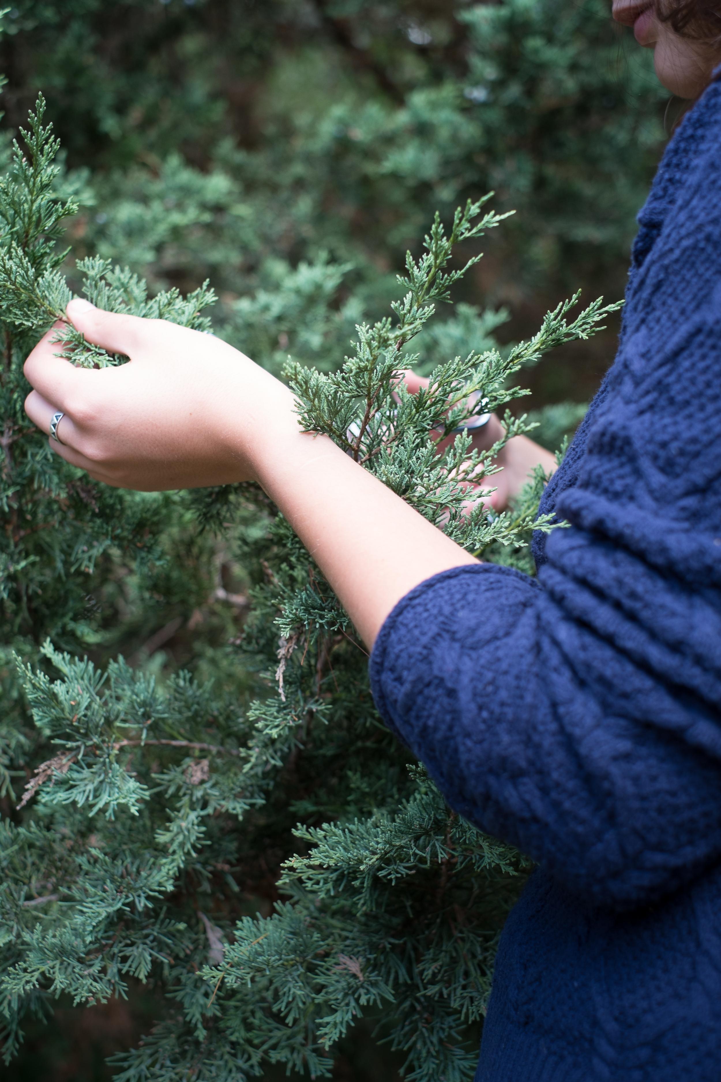 Meet Me In The Woods Edits-1.jpg
