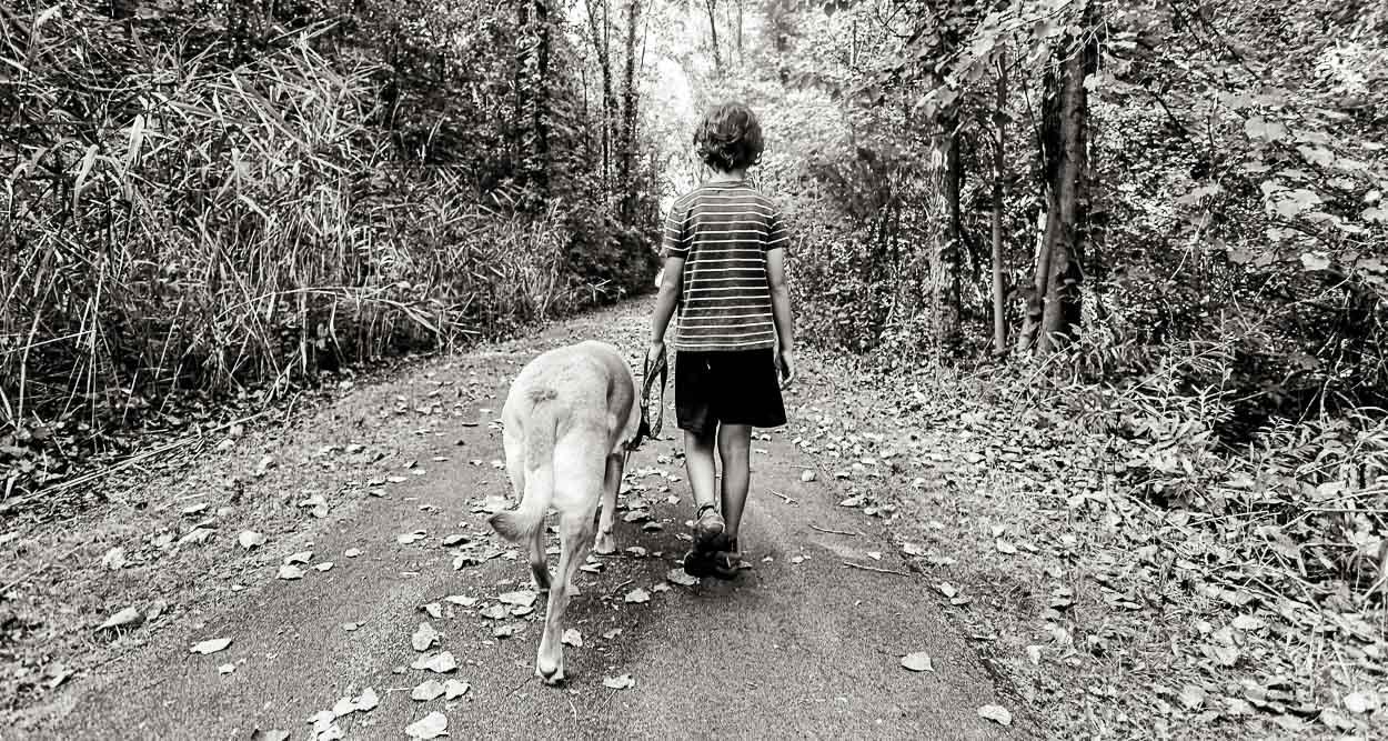 dog-walkin', sept. 2015