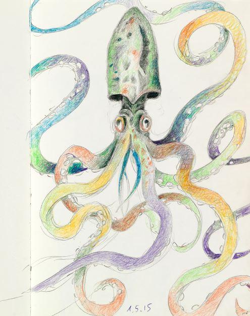 CF_octopus.JPG