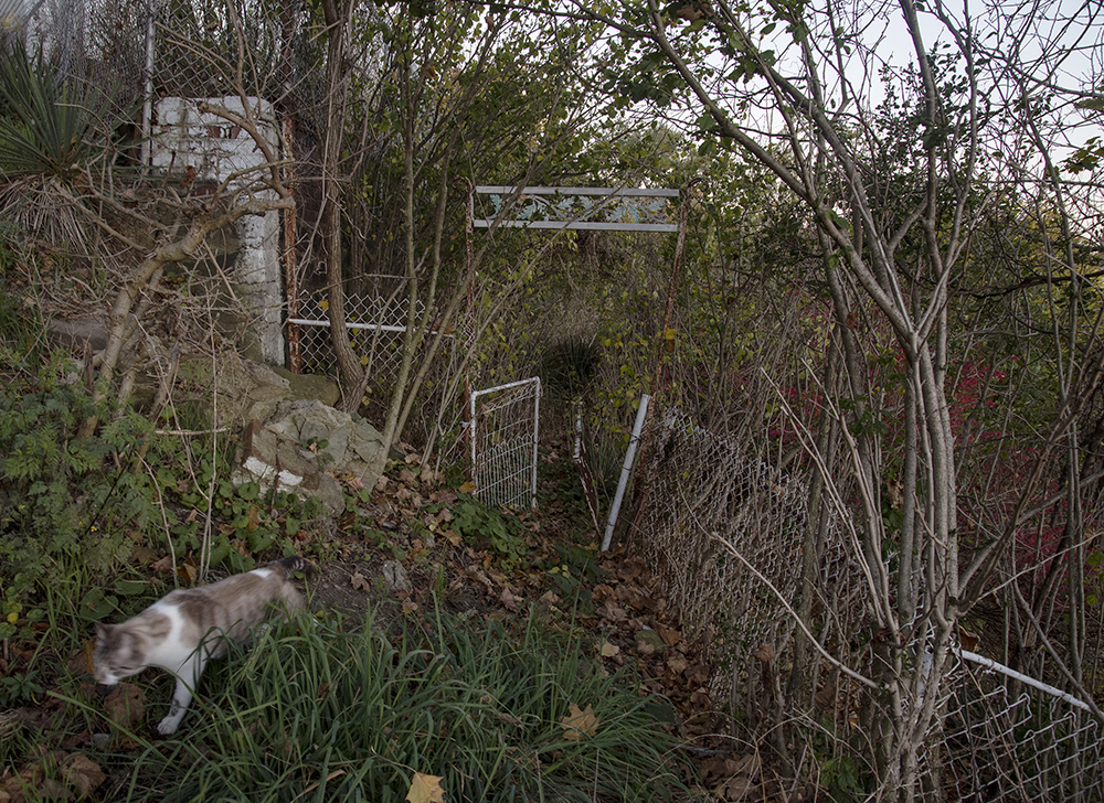 Gate into the Garden