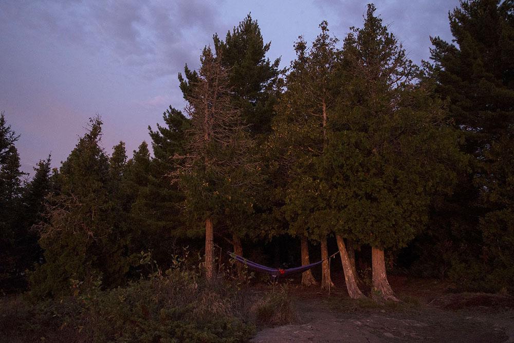 Morning Light on White Cedars