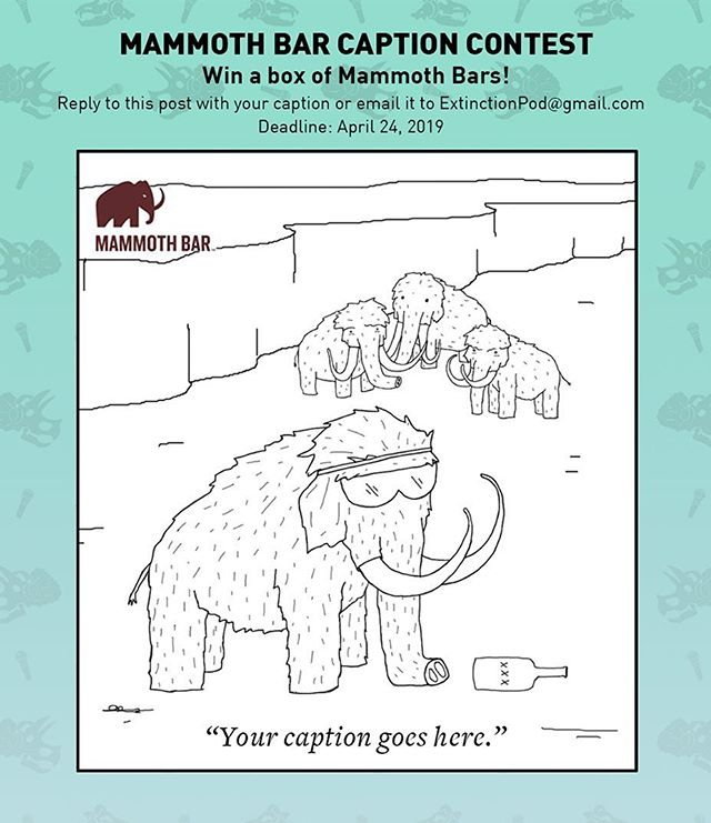 It's the @mammothbars caption contest! Make us laugh and you could win your very own box of mammoth bars. Reply with your caption to enter ✍🏽 . . . . . . . . . . . . . . . . . . . . . . . . . . . . . . . . . . . . . . . . . . . . . . . . . . . . . . . . . . . . . . . . . . . . . . . . . . . . . . . . . . . . . . . . . . . . . . . . . . . . . . . . . . . . . . . . . . . . . . . . . . . . . . . . . . . . . . . . . . . . . . . . . . . . . . . . . . . . . . . . . . . . . . . . . . . . . . . . . . . . . . . . . . . . #eatmighty #bemighty #captioncontest #contest #contestgiveaway #noweirdstuff #podcast #extinction #mammoth #woollymammoth