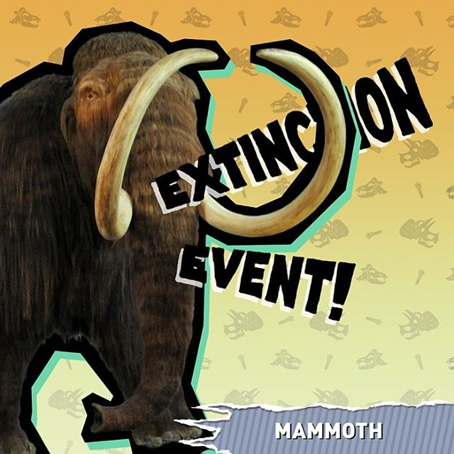 The MAMMOTH EPISODE!!! It's here guys. Go and get it . . . . . . . . . . . . . . . . . . . . . . . . . . . . . . . . . . . . . . . . . . . . . . . . . . . . . . . . . . . . . . . . . . . . . . . . . . . . . . . . . . . . . . . . . . . . . . . . . . . . . . . . . . . . . .  #extinction #extinctionevent #extinct #podcast #mammoth #animals #nature #science #history #funny #comedy #woollymammoth #prehistoric #iceage