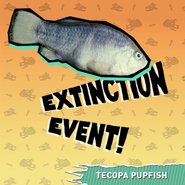 New episode! Things turn toxic for the Tecopa Pupfish when their home becomes a vacation destination. Find out what happened to this tiny fish you've never heard of on this weeks episode ☠️🐟☠️🐟☠️🐟☠️ . . . . . . . . . . . . . . . . . . . . . . . . . . . . . . . . . . . . . . . . . . . . . . . . . . . . . . . . . . . . . . . . . . . . . . . . . . . . . . . . . . . . . . . . . . . . . . . . . . . . . . . . . . . . . .  #extinction #extinct #extinctionevent #fish #animals #tecopa #tecopahotsprings #hotsprings #mojavedesert #deathvalley #palmsprings #comedy #funny #podcast