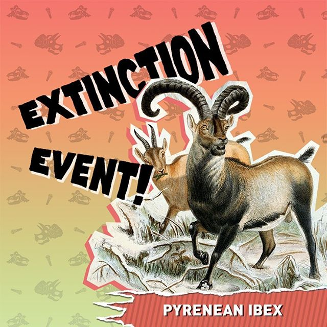 They could run. They could climb. But, these wild goats couldn't hide from extinction. Learn all about the Pyrenean Ibex's death march on this weeks episode of Extinction Event ! 🐐. . . . . . . . . . . . . . . . . . . . . . . . . . . . . . . . . . . . . . . . . . . . . . . . . . . . . . . . . . . . . . . . . . . . . . . . . . . . . . . . . . . . . . . . . . . . . . . . . . . . . . . . . . . . . .  #pyreneanibex #pyrenees #mountains #goats #extinctionevent #extinction #extinct #animals #nature #history #naturalscience #podcast #comedy