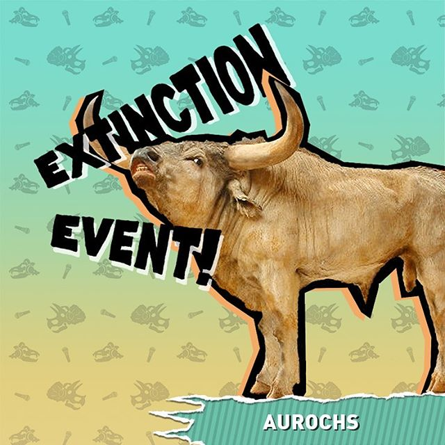 We may never know how delicious they tasted, but we do know how the ancestor of modern day domesticated cattle went extinct. Find out on this weeks episode of Extinction Event! 🐂🐂🐂 #aurochs #bovine #cattle #cows #animals #nature #extinct #extinction #extinctionevent #history #podcast #comedy #funny