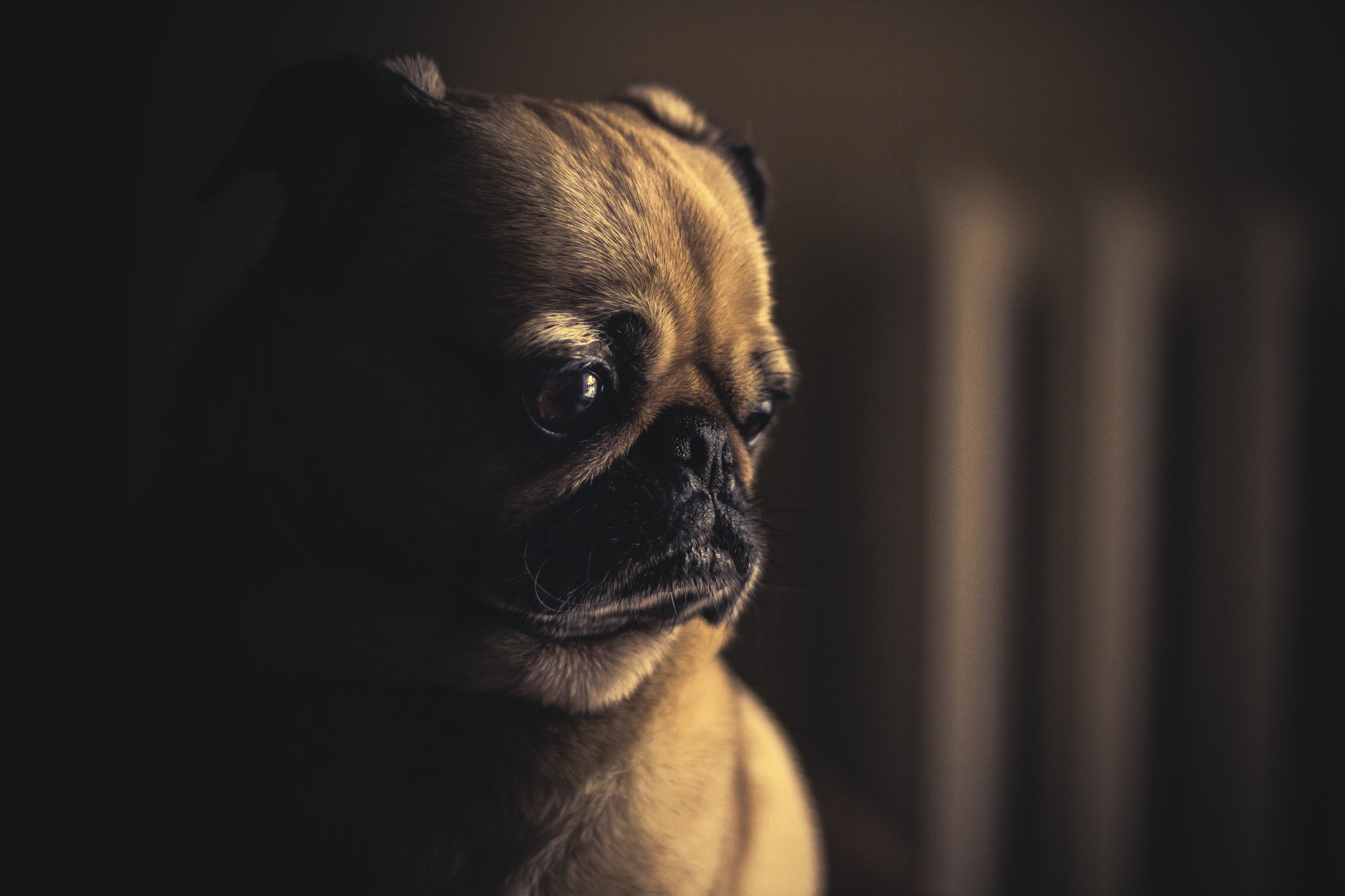 This sad dog has a cluttered caption. (Photo by Matthew Weibe, reproduced under a Creative Commons Zero license: https://unsplash.com/photos/hnYMacpvKZY)