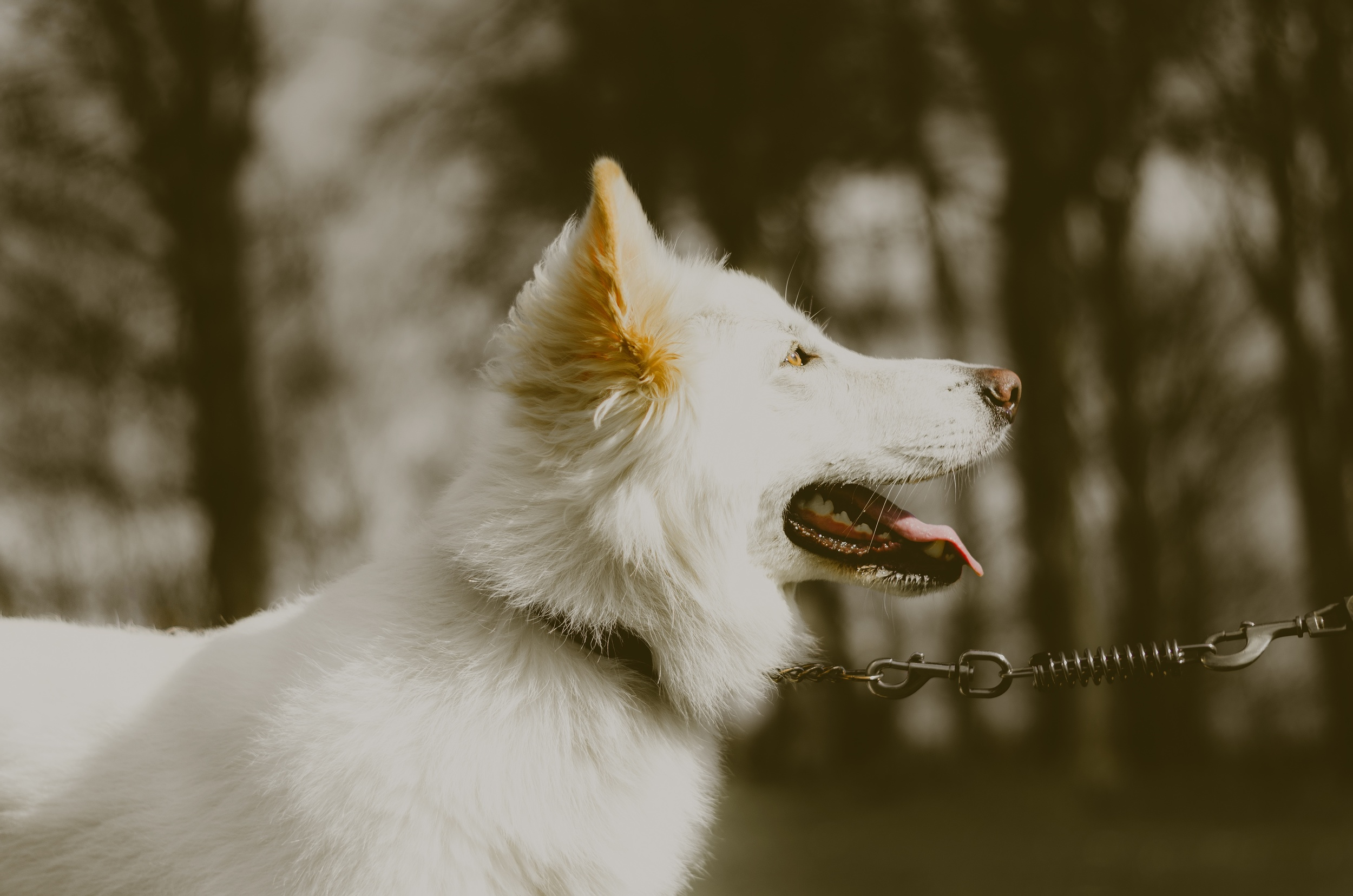 This happy dog has an clean caption. (Photo by  Olu Eletu )