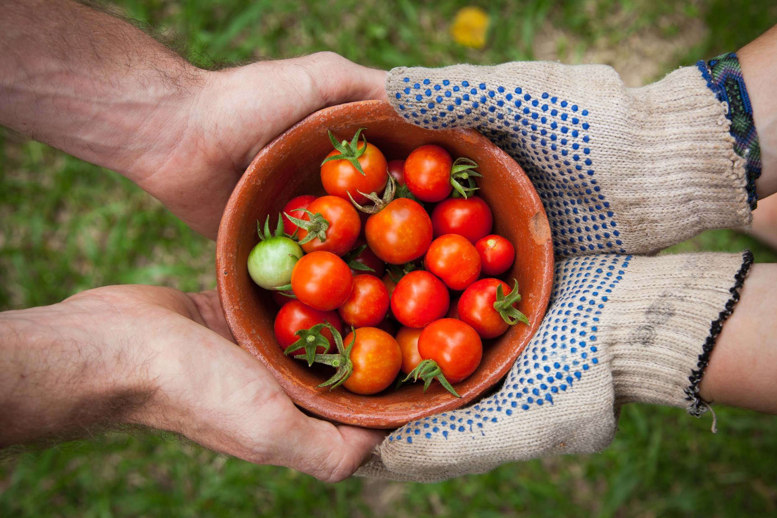 Whether you're sharing tomatoes or sharing free stock images, it's always a good idea to indicate where the item came from. (Photo by  Elaine Casap )