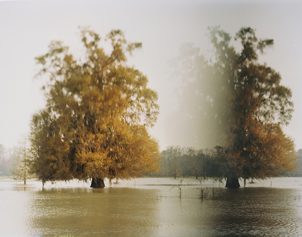 ANSLEY WEST RIVERS  Disappearing Trees, Altamaha River, GA, 2014  Archival Pigment Print  Available sizes 24 x 30 inches, edition of 7 40 x 50 inches, edition of 7