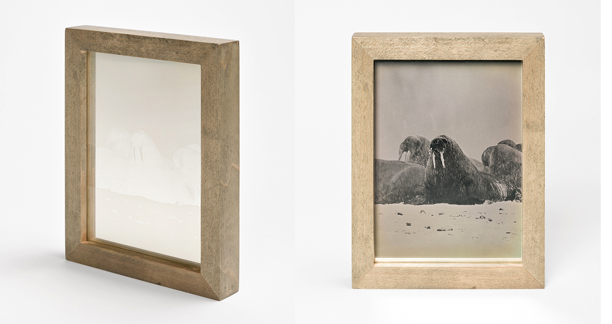 CHRISTINA SEELY Arctic - WALRUS Daguerreotype, 2012-2016 Museum Sets, 4.5 x 5.5 inches, edition of 3 + 1AP Small Single Plates, 2.5 x 3 inches, edition 3 + 1AP