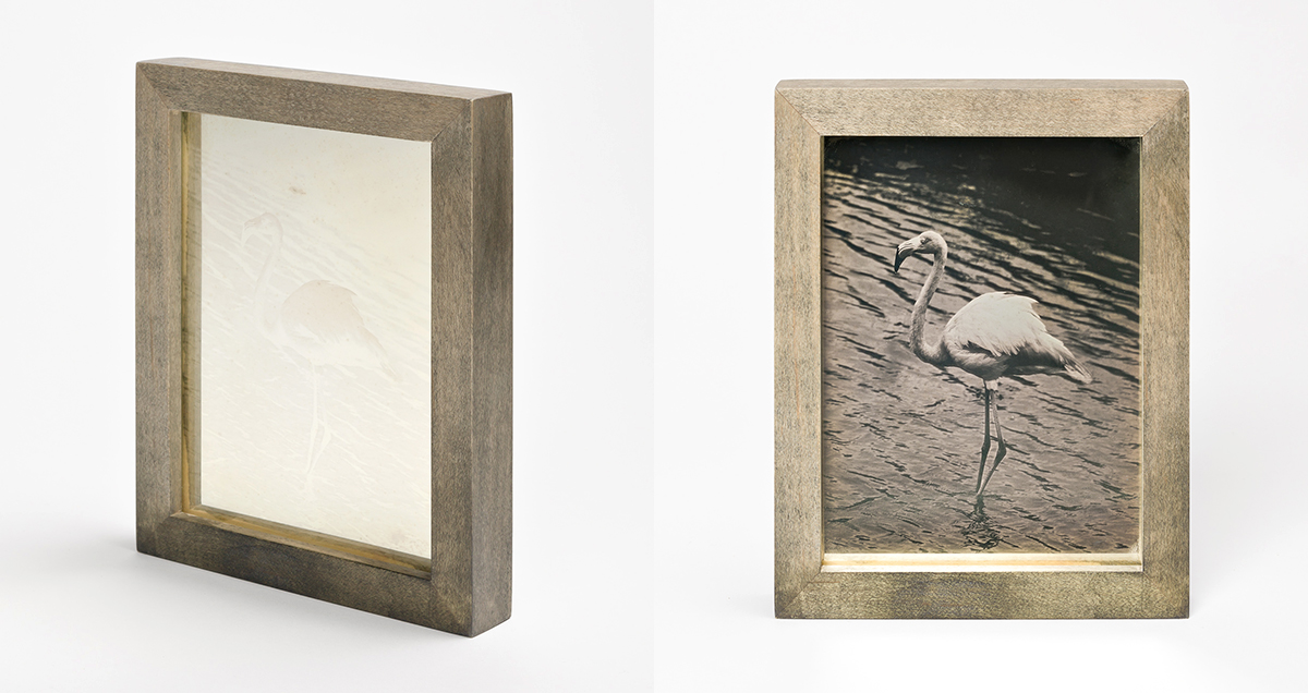 CHRISTINA SEELY Tropic - GREATER FLAMINGO Daguerreotype, 2012-2016 Museum Sets, 4.5 x 5.5 inches, edition of 3 + 1AP Small Single Plates, 2.5 x 3 inches, edition 3 + 1AP