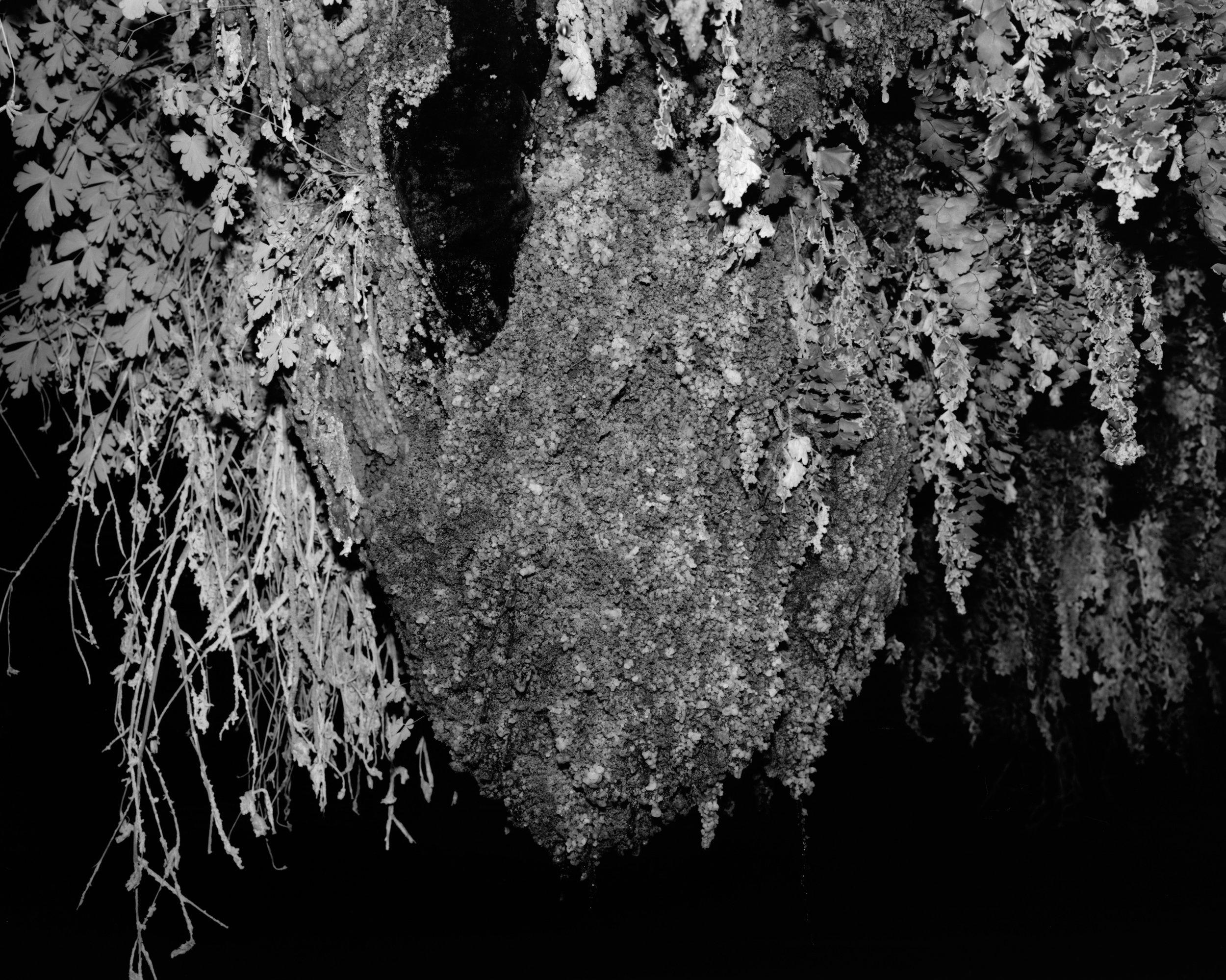 MICHAEL LUNDGREN  Garden, 2014  Gelatin silver print 32 x 40 in ed. 7 + 1AP