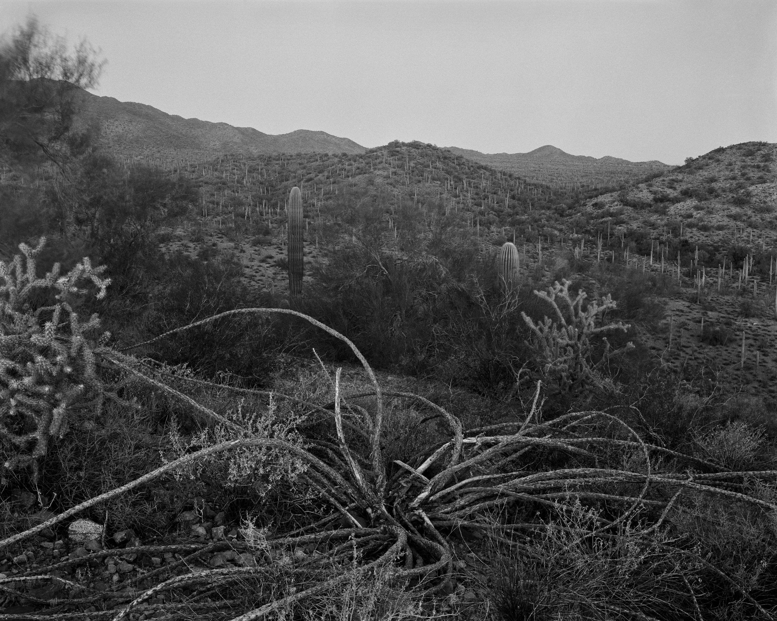 MICHAEL LUNDGREN  Dawn, 2002  Gelatin Silver Print  Available sizes 20 x 24 in, ed. 10 + 2AP 32 x 40 in, ed. 3 + 1AP
