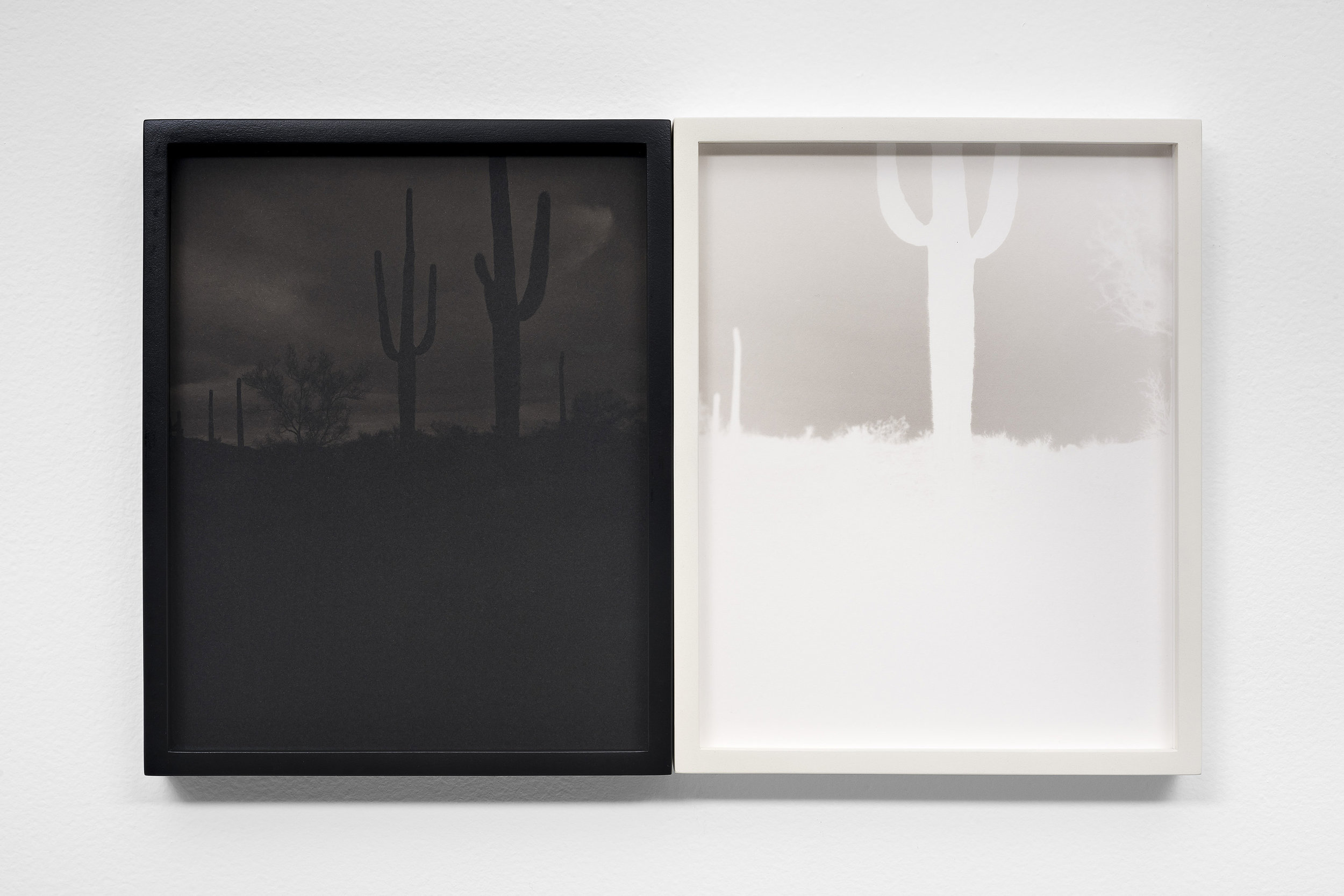 SCOTT B. DAVIS Saguaro Forest, Sauceda Mountains, Arizona, 2017 Unique paper negative palladium / platinum prints, diptych 10 x 16 inches