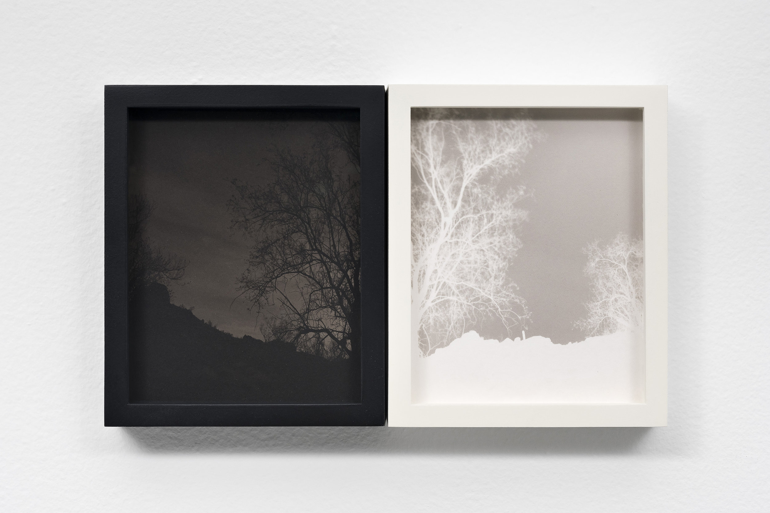 SCOTT B. DAVIS  Ironwood Tree on Volcanic Soil,  2018 Unique paper negative palladium / platinum prints, diptych 5 x 8 inches