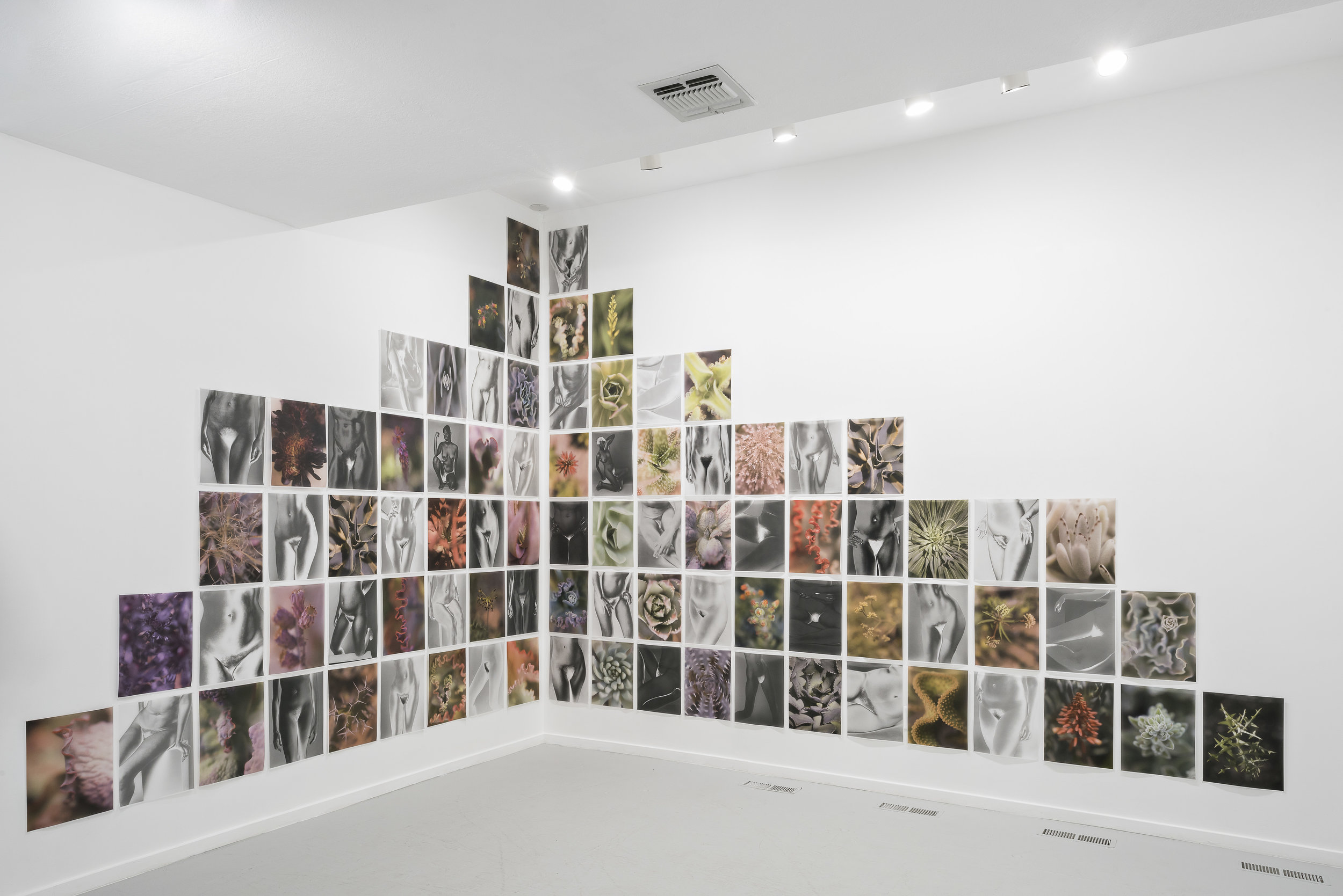 Mona Kuhn:  Bushes & Succulents  March 2 - April 27, 2019  PRESS RELEASE  |  EXHIBITION VIEWS