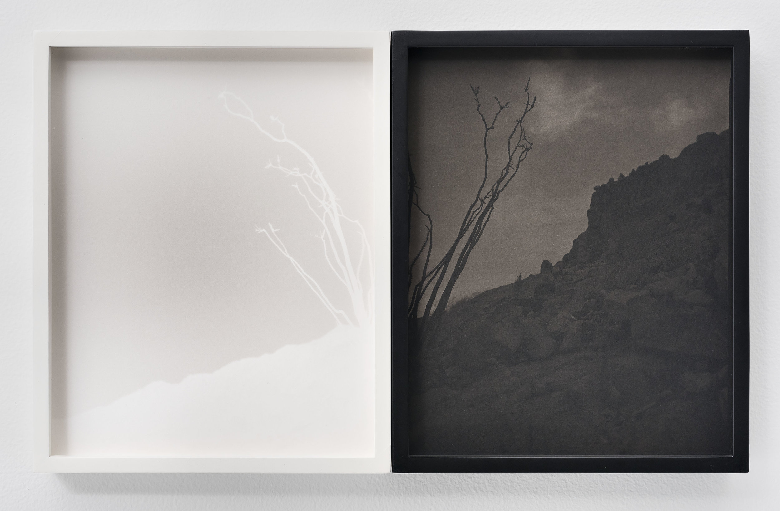 SCOTT B. DAVIS  Ocotillo, Ocotillo (No. 58),  2018 Unique paper negative palladium/platinum prints, diptych 10 x 16 inches