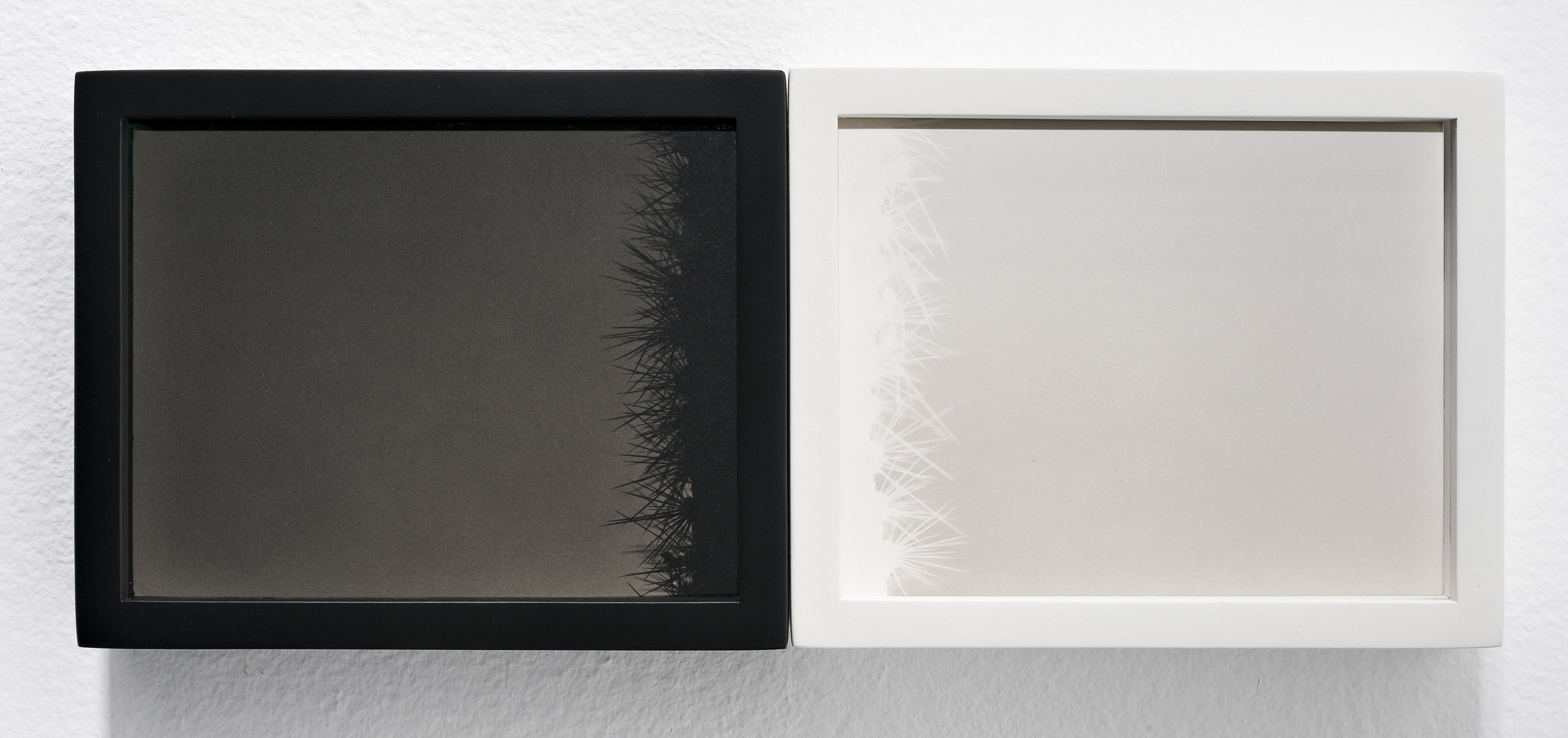 SCOTT B. DAVIS Saguaro, U.S./Mexico Border, 2018 Unique paper negative palladium prints, diptych 4 x 10 inches; frame: 4.5 x 10.5 inches
