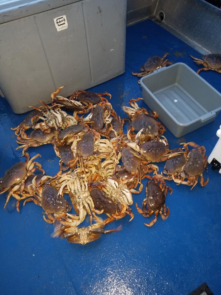 crab deck.JPG