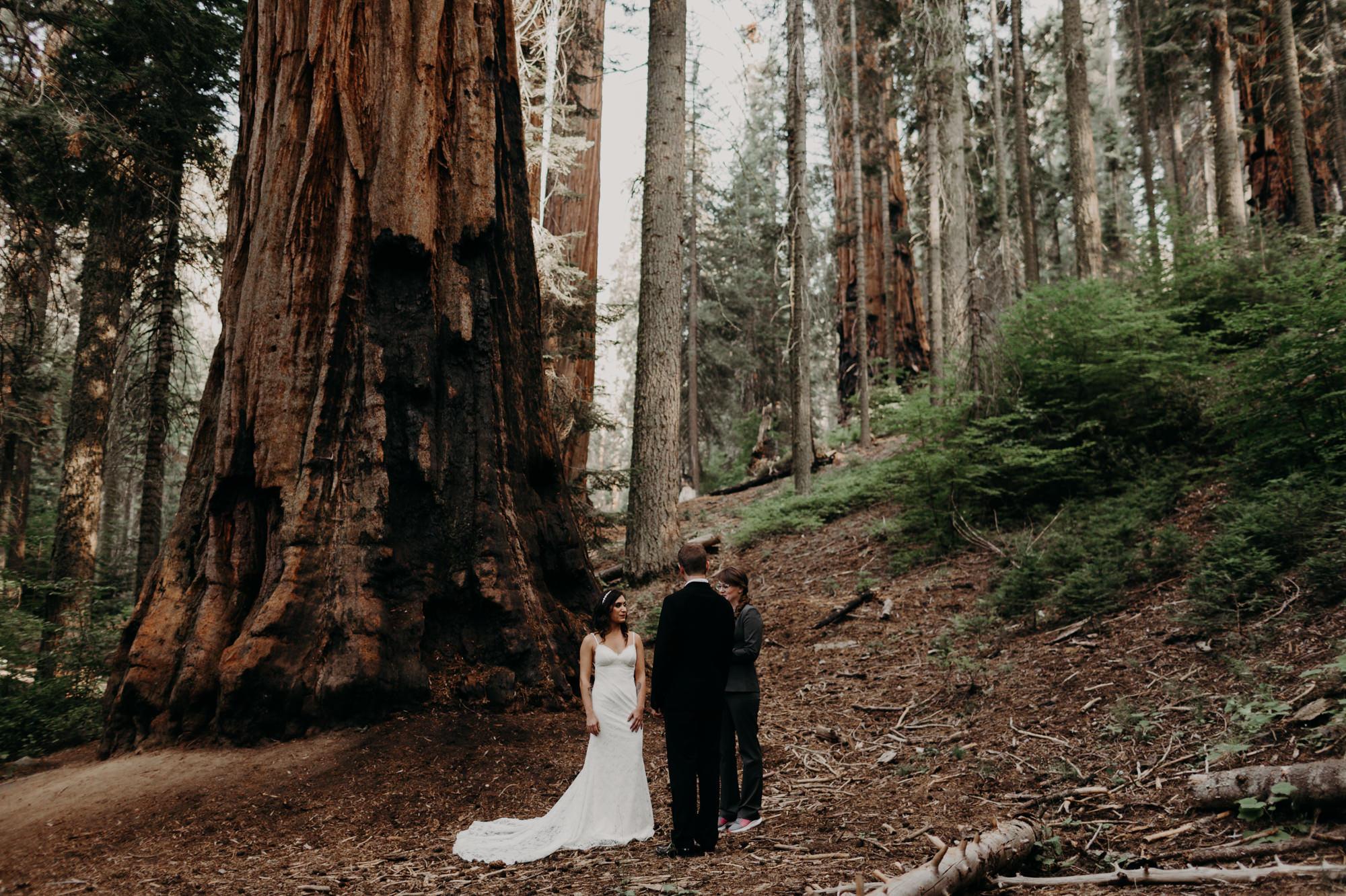 sequoia national park elopement-2.jpg