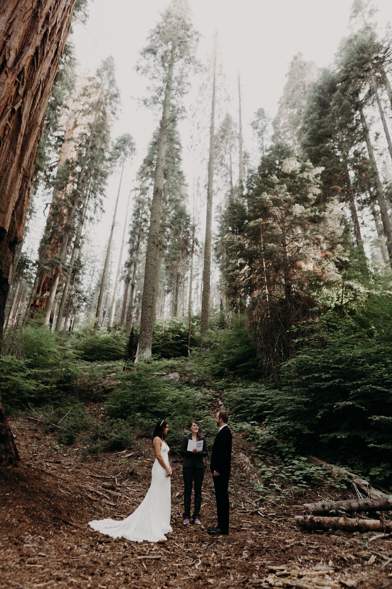 sequoia national park elopement-9.jpg