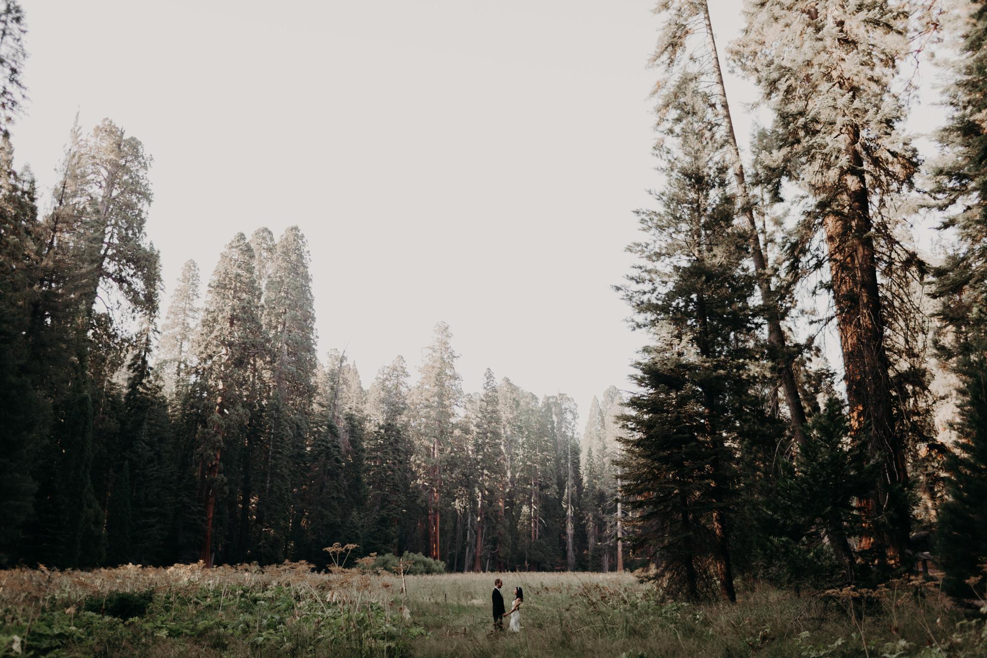 sequoia national park elopement-21.jpg