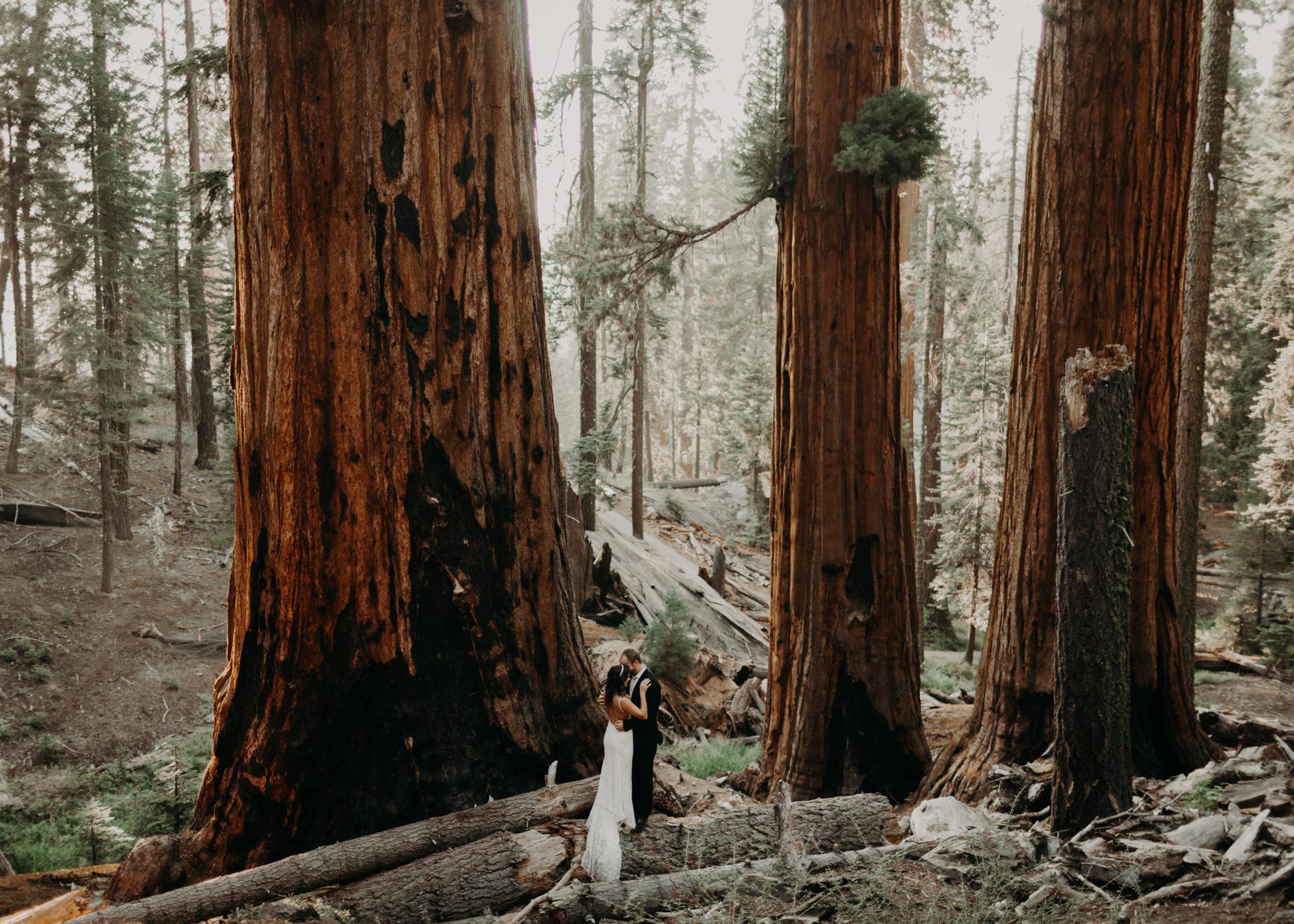 sequoia national park elopement-36.jpg